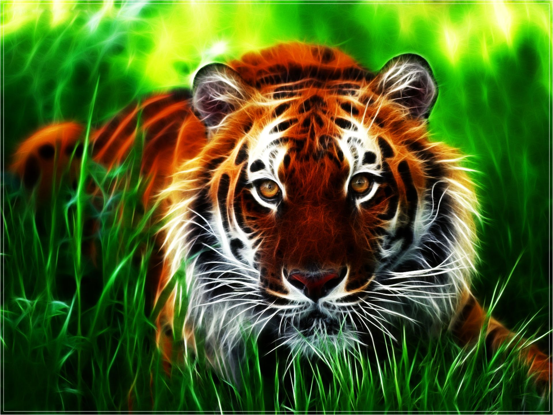 HD Wallpapers Animals