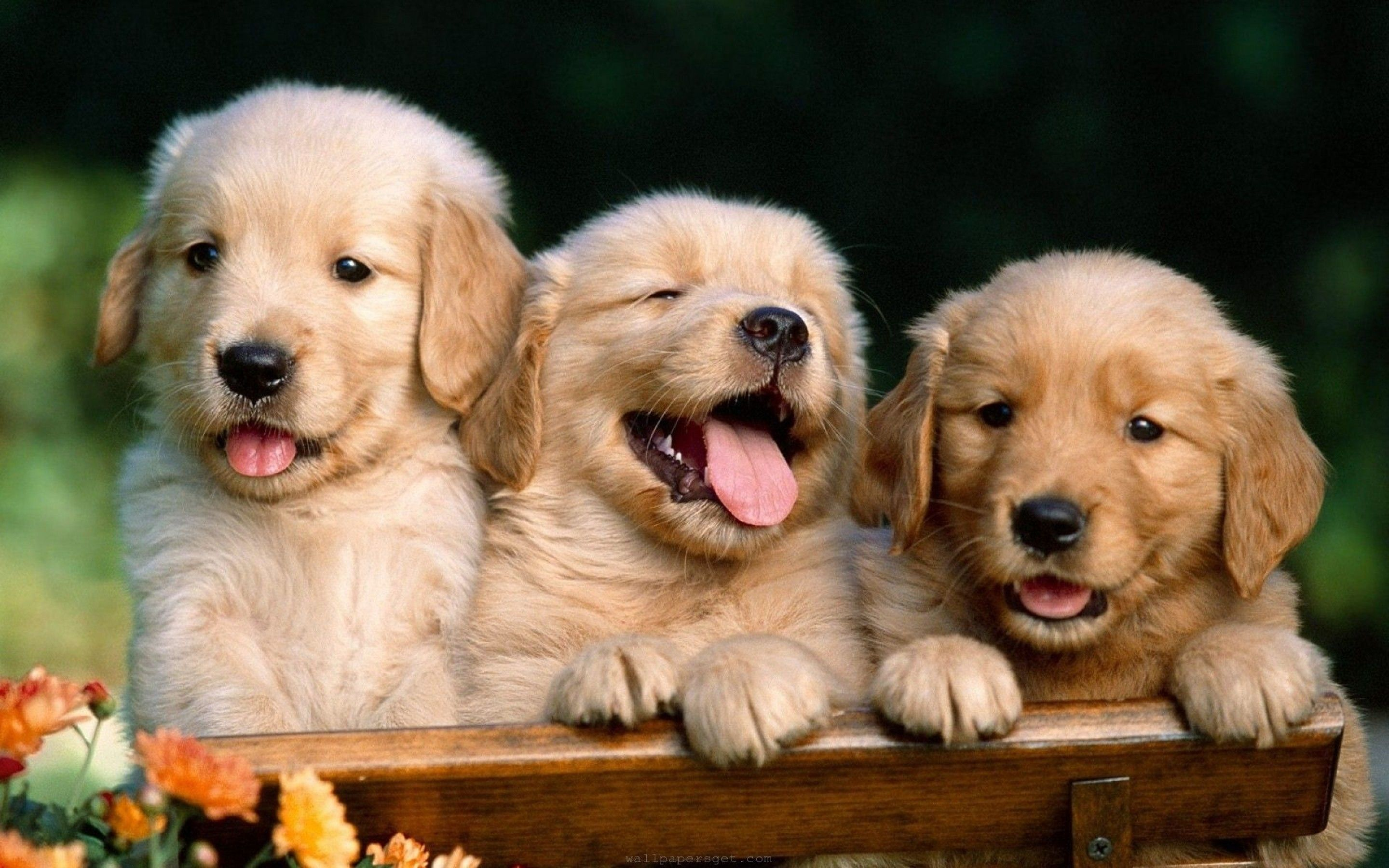 HD Wallpapers Cute Dogs