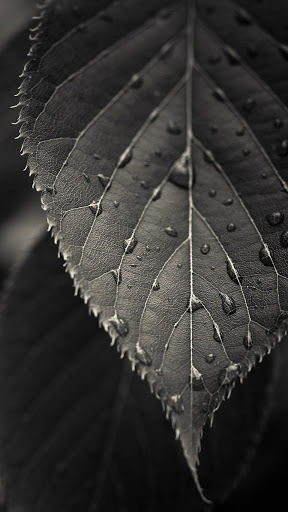 HD Wallpapers For Htc One M8