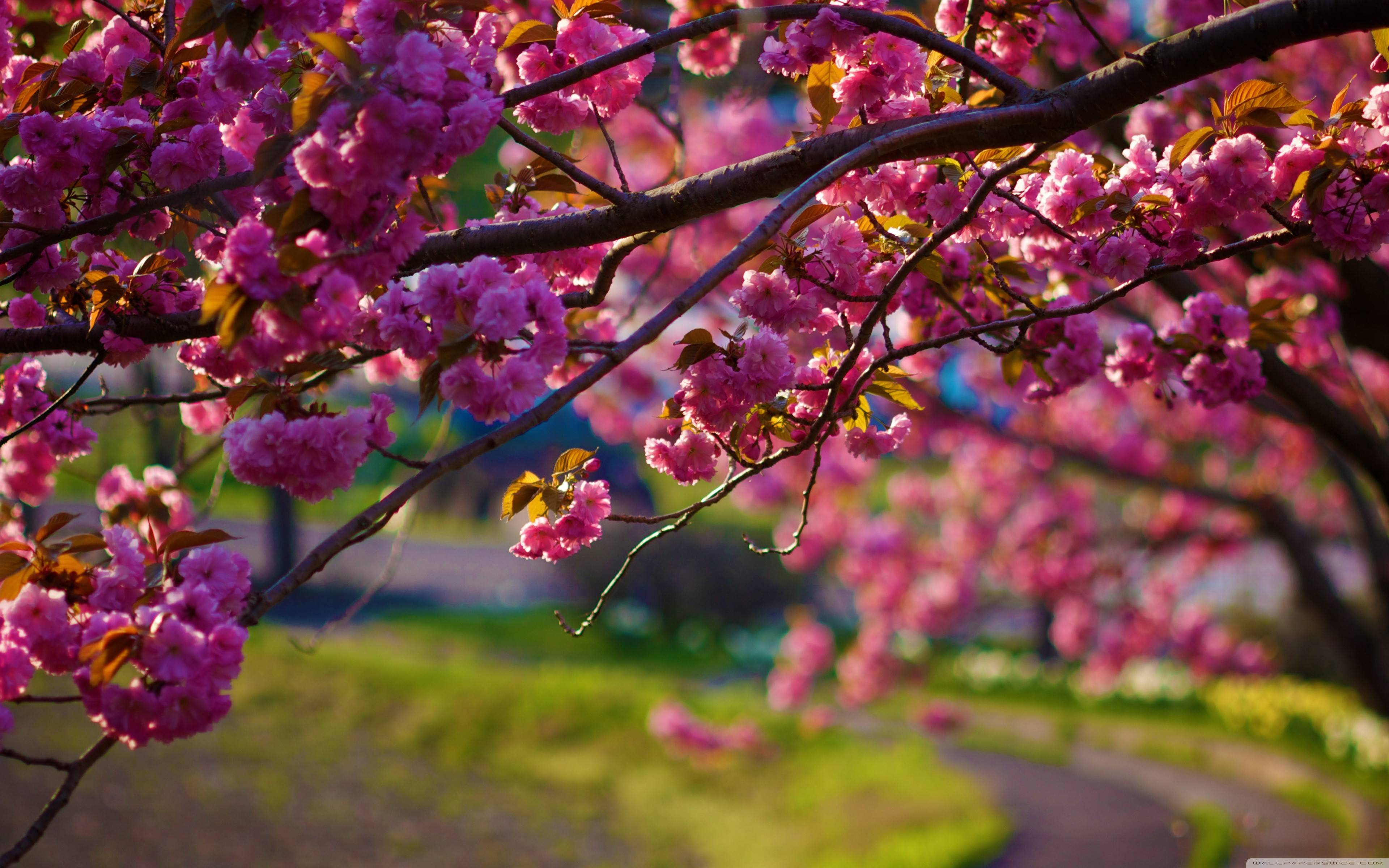 HD Wallpapers Nature Spring