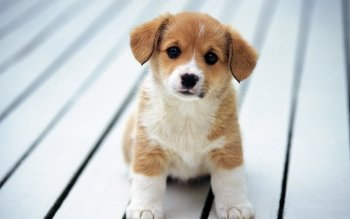 HD Wallpapers Of Dogs