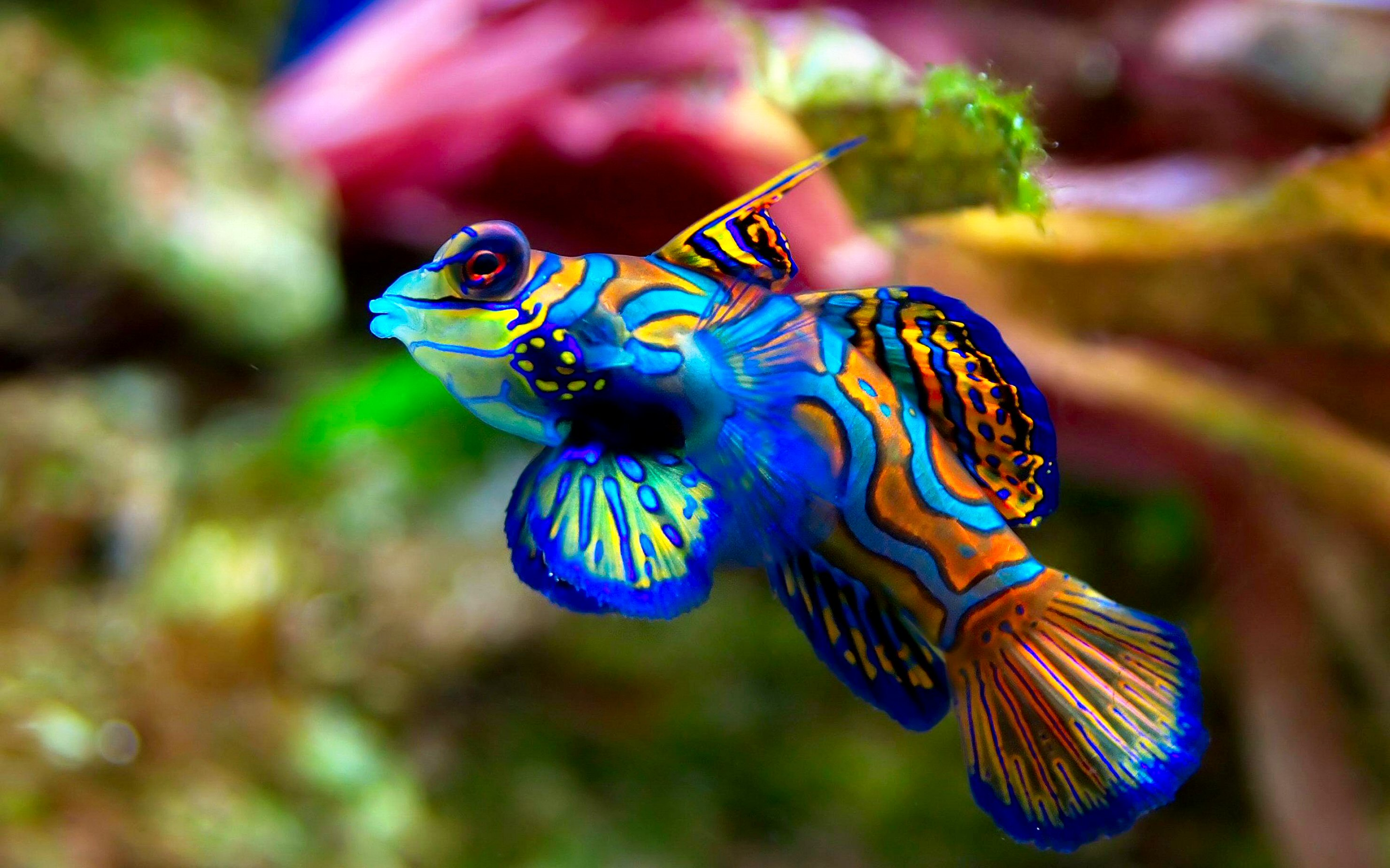 HD Wallpapers Of Fish