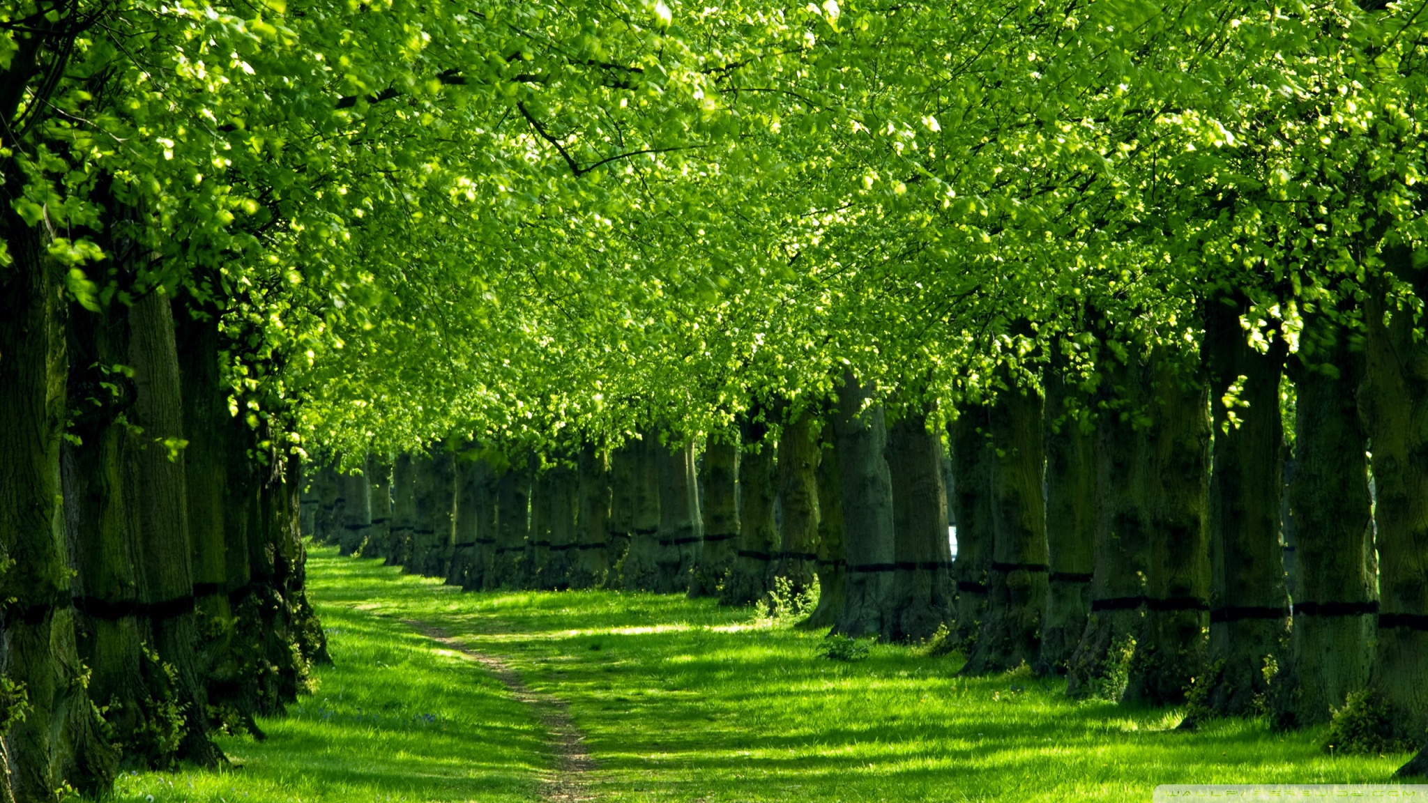 HD Wallpapers Of Trees