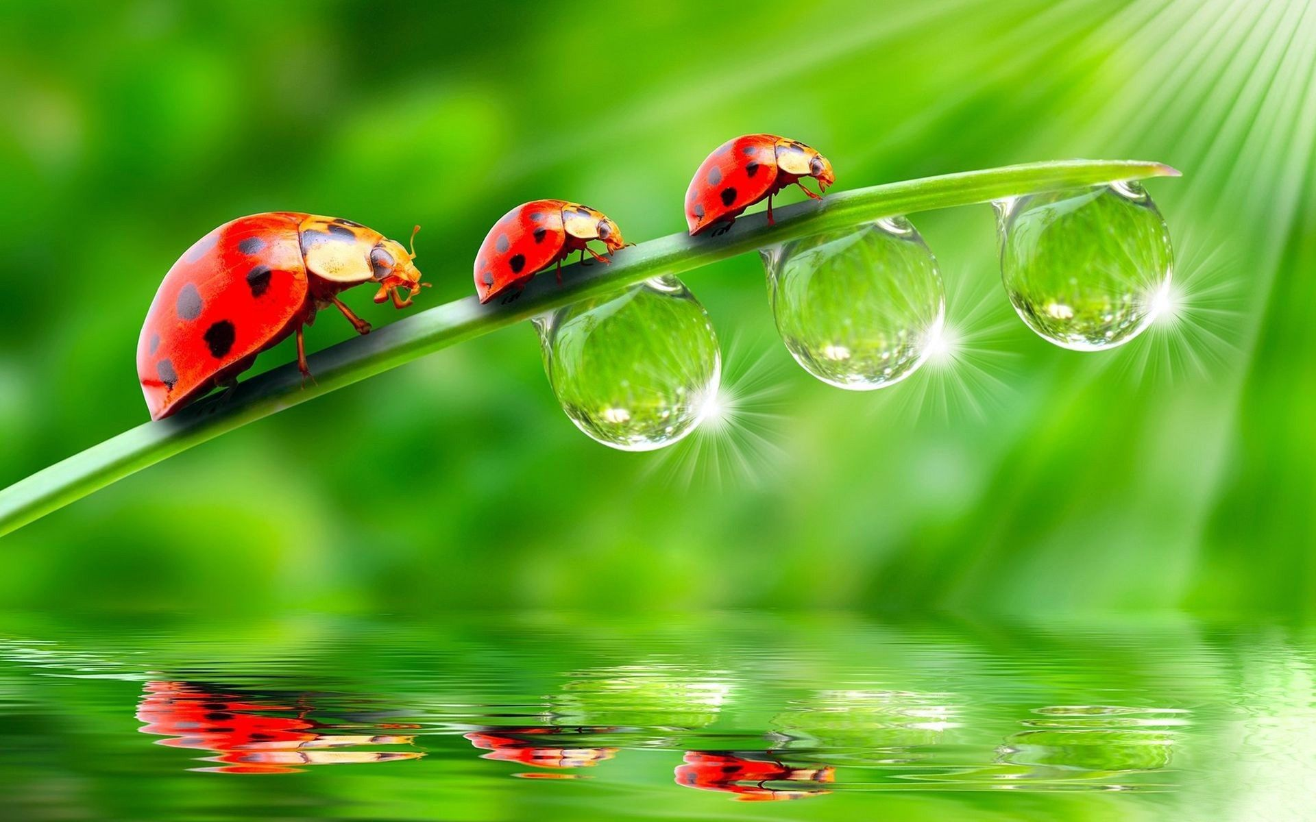 HD Wallpapers Of Water Drops
