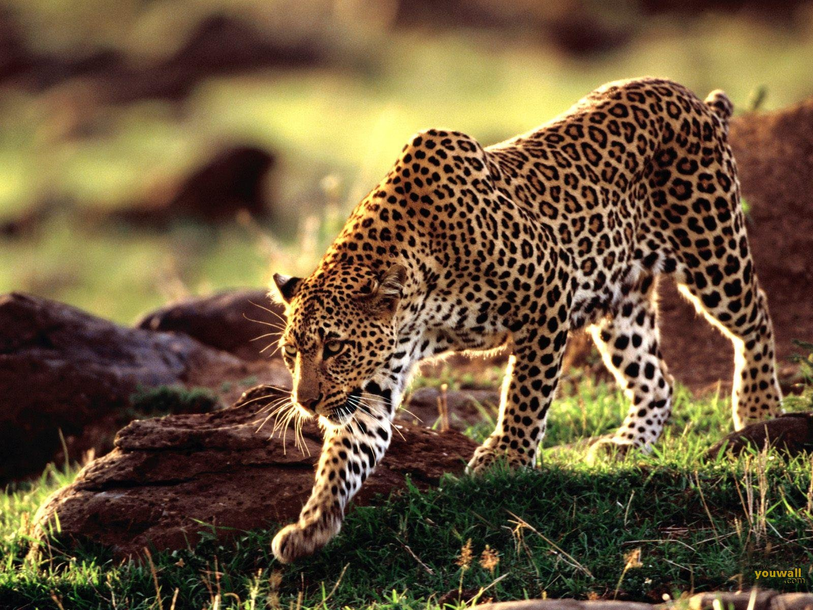HD Wallpapers Of Wild Animals