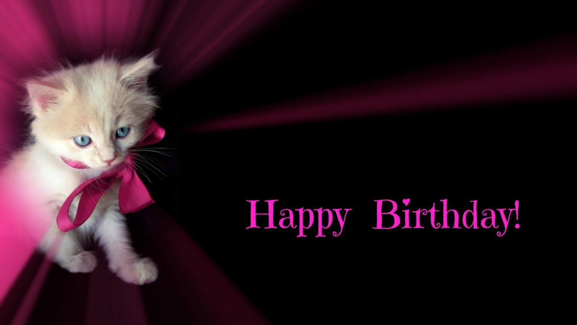 Happy Birthday Cat Wallpaper