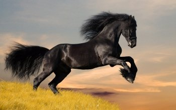 Horse Full HD Wallpaper