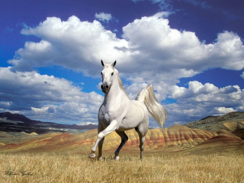 Horse HD Wallpaper Download