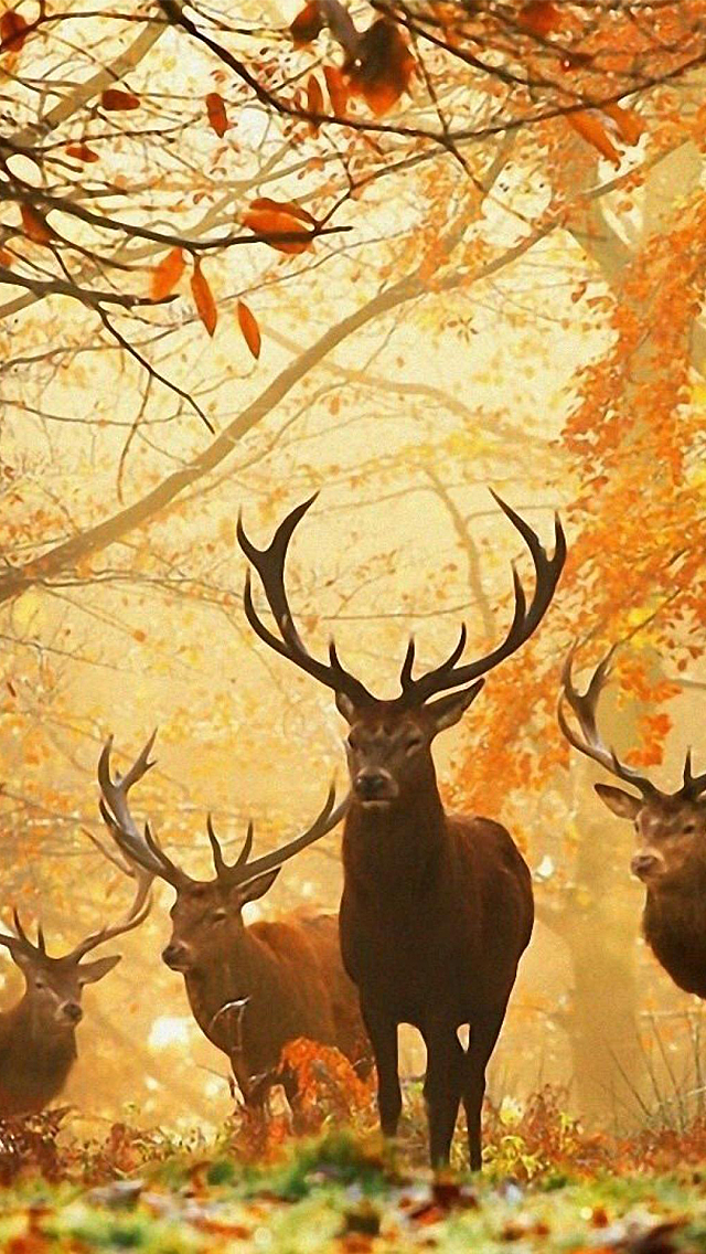 Hunting Wallpaper For Phone