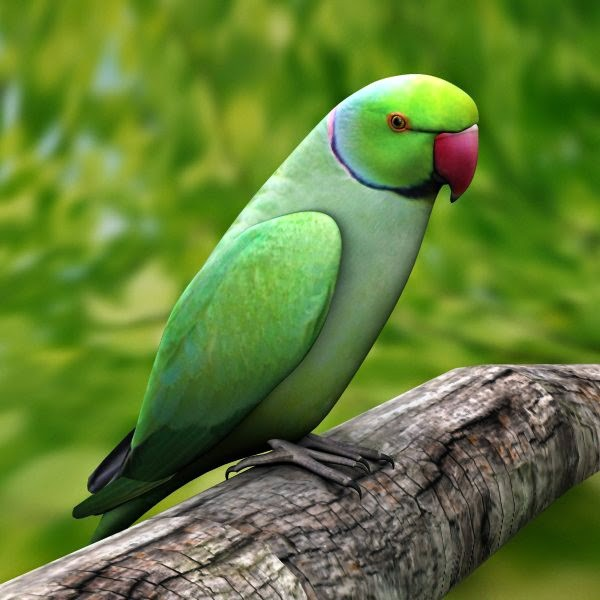 Download Indian Parrot Wallpaper Gallery