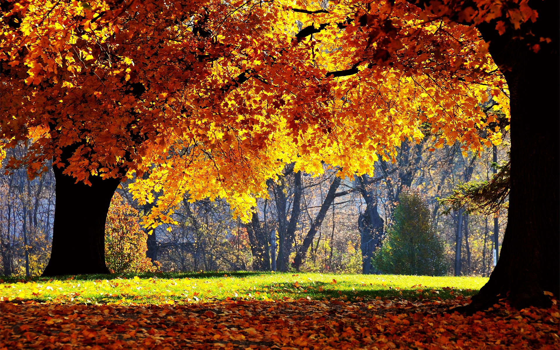 Indian Summer Wallpaper