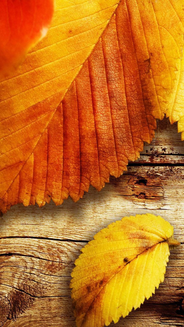 Iphone 5 Autumn Wallpaper