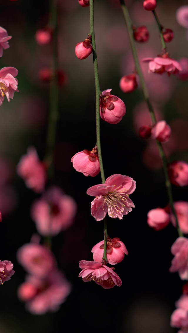 Iphone 5 Flower Wallpaper