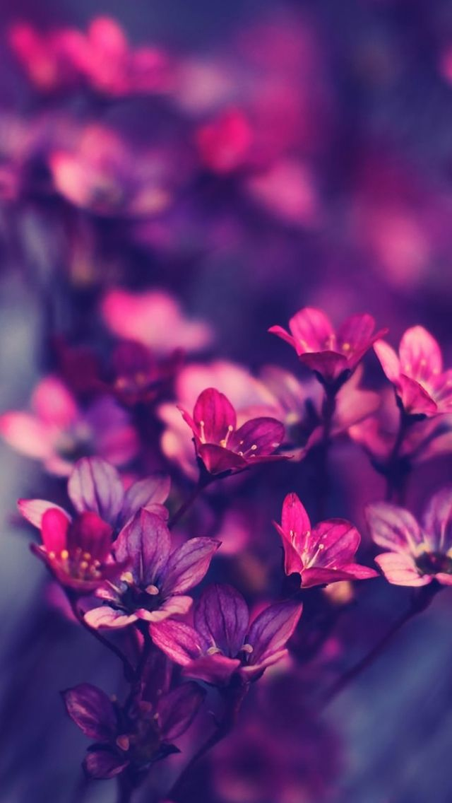 Iphone Purple Wallpaper