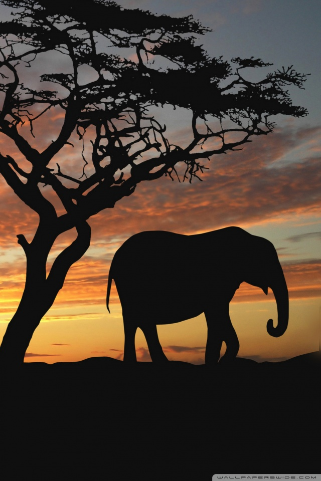 Download iphone wallpaper elephant gallery - Elephant background iphone ...