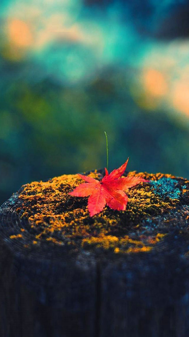 Iphone Wallpaper Fall