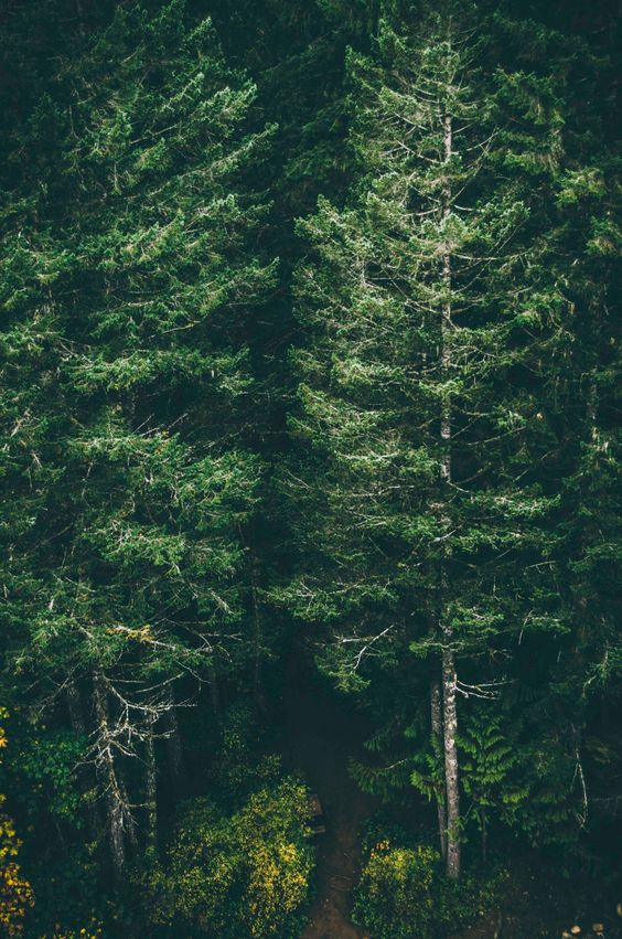 Iphone Wallpaper Forest