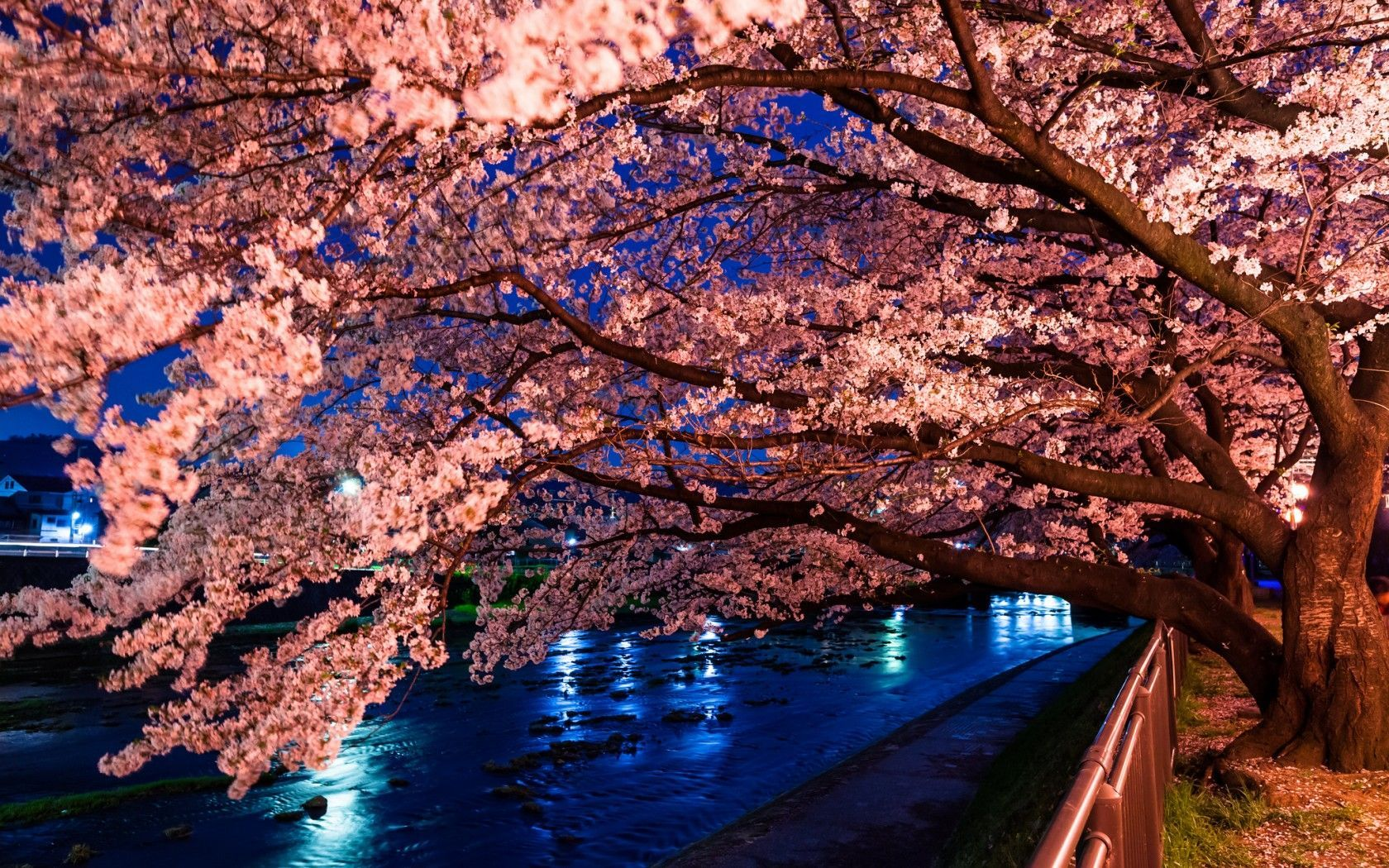 Download Japanese Cherry Blossom Desktop Wallpaper Gallery