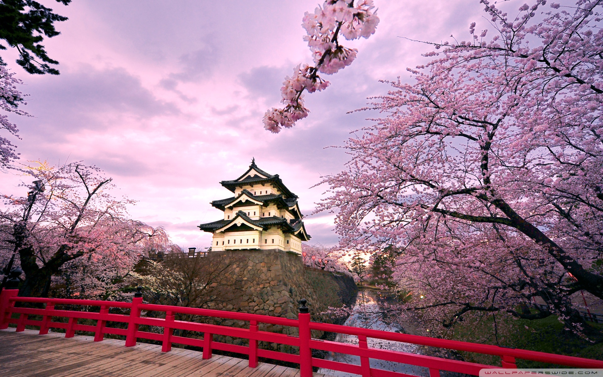 Japanese Cherry Blossom Wallpaper