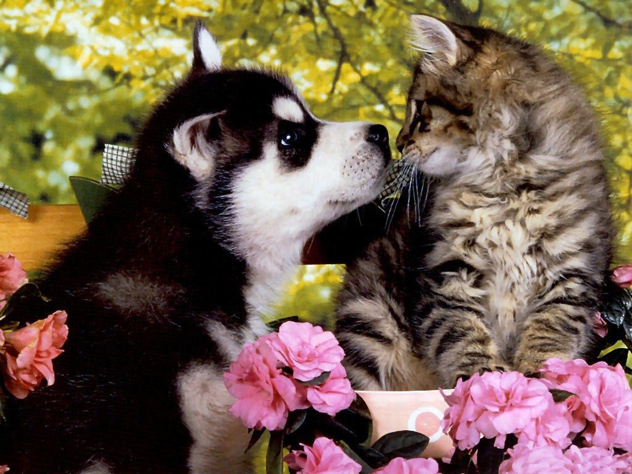 Kittens And Puppies Wallpaper
