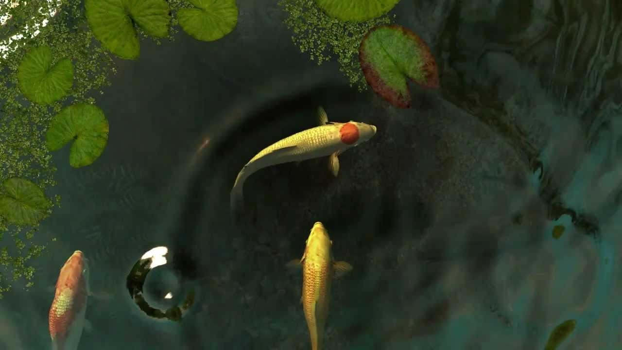 Koi Fish 3D Wallpaper
