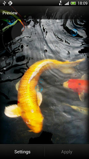Download Koi Fish Live Wallpaper Full Version Free