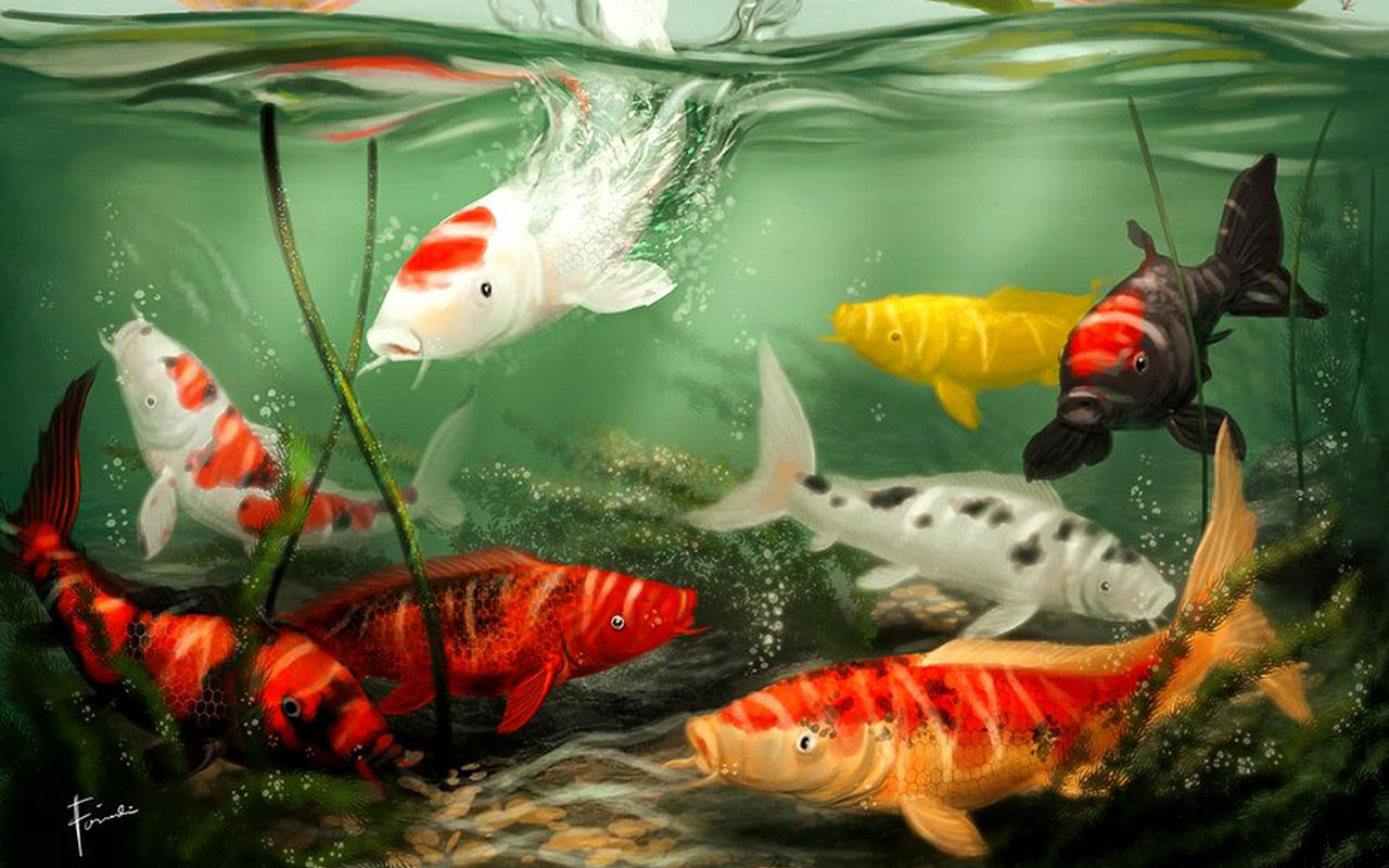 Fish 3d wallpaper download wallpapers for free download