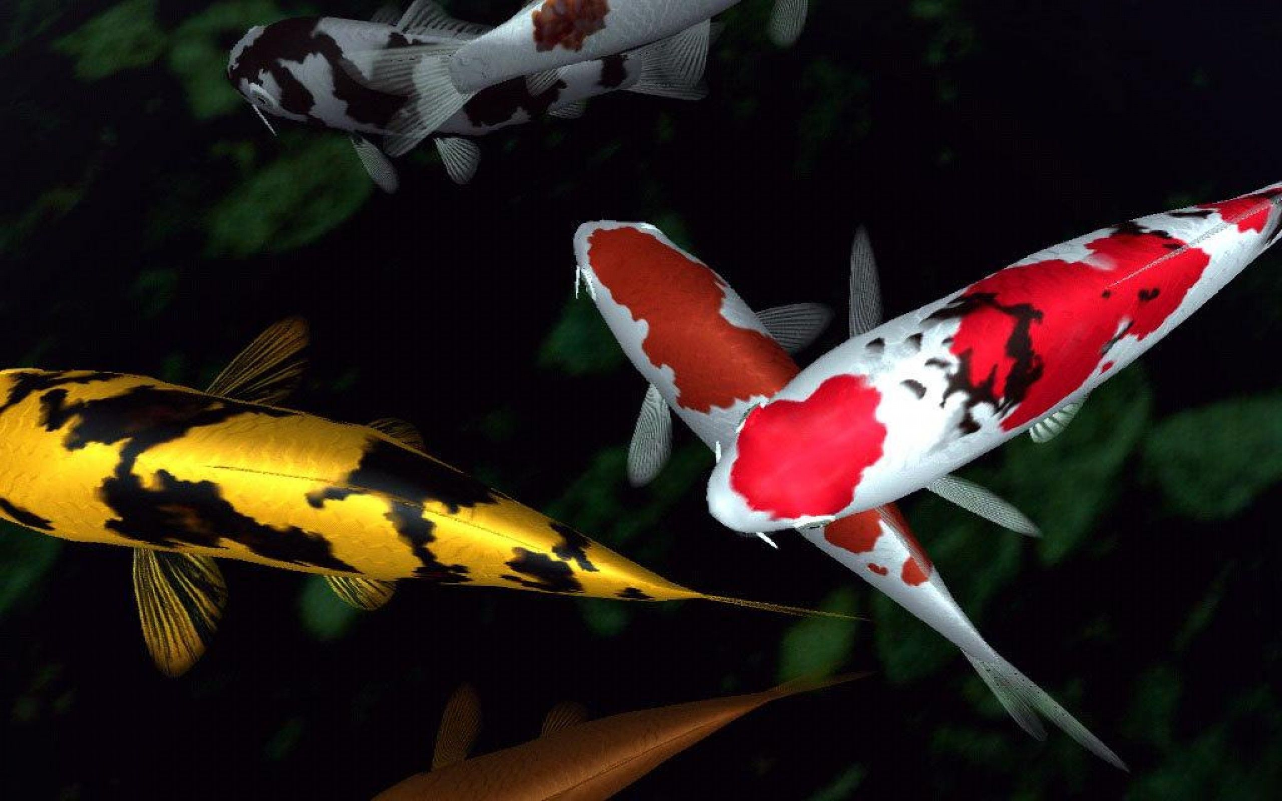 Koi Fish Wallpaper HD