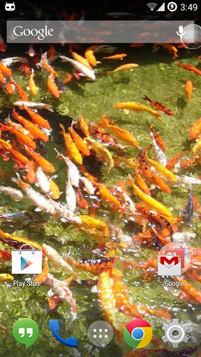 Koi Free Live Wallpaper Free Download