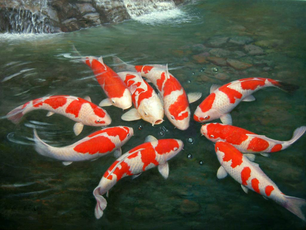 Koi Free Wallpaper Download
