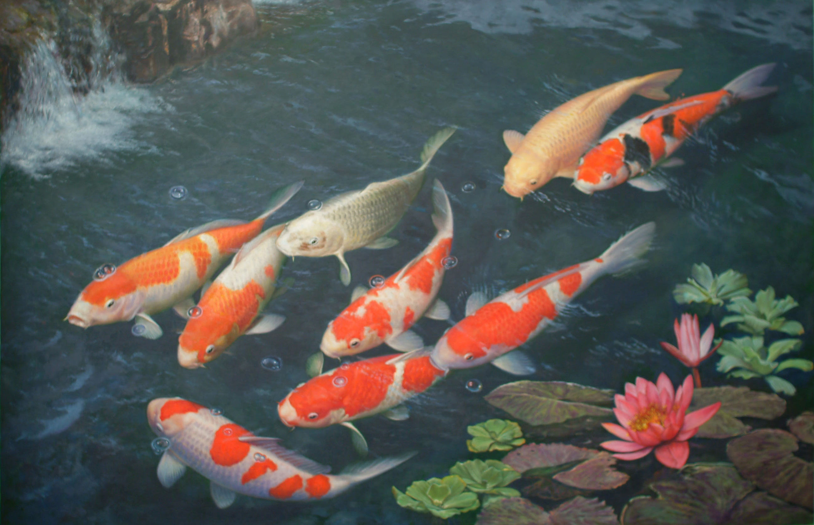 download koi hd live wallpaper gallery