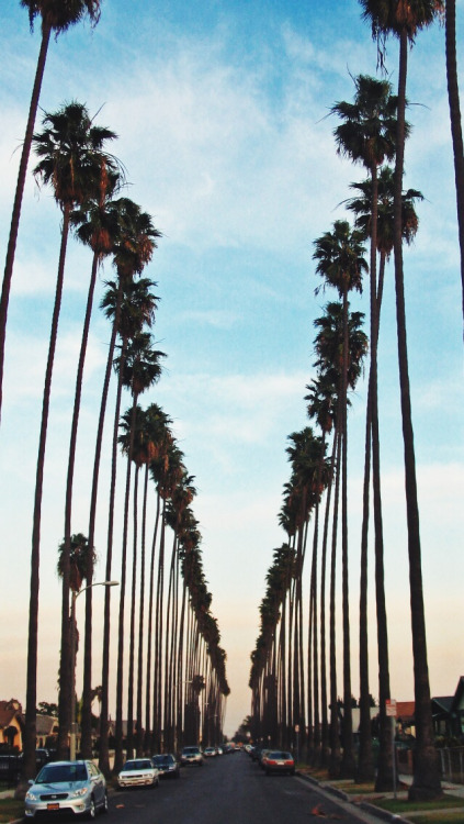 La Palm Trees Wallpaper