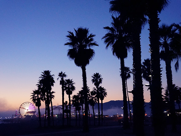 Mercedes Los Angeles >> Download La Palm Trees Wallpaper Gallery