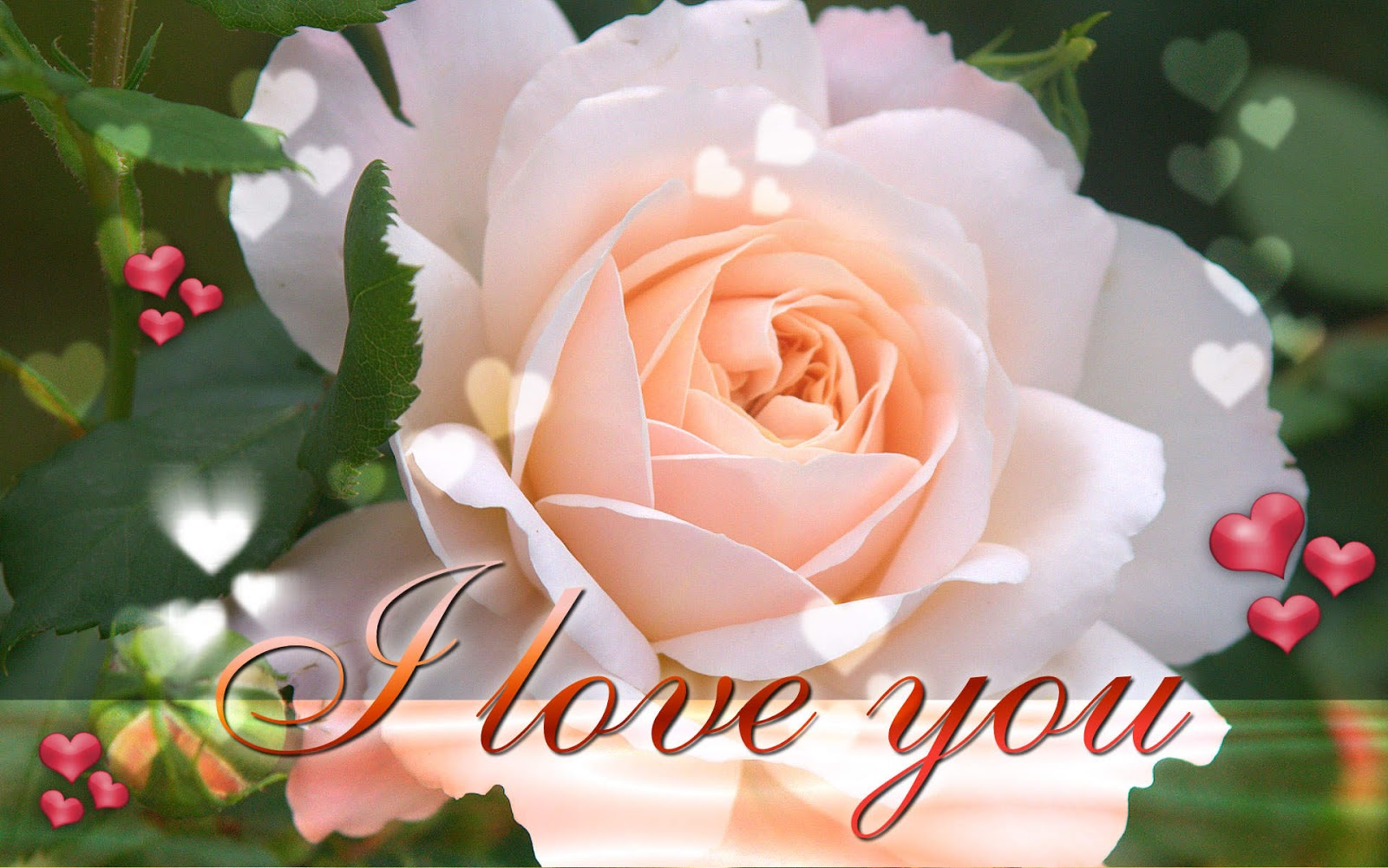 Latest I Love You Wallpapers