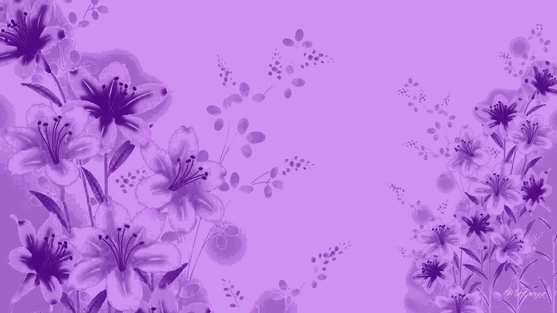 Lavender Color Wallpaper