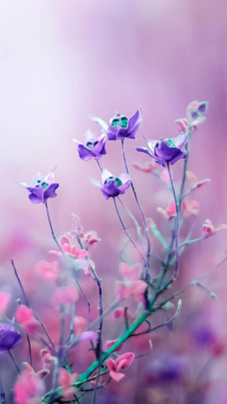 Lavender Iphone Wallpaper