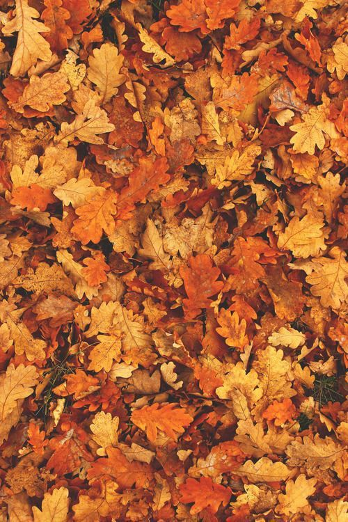 Leaves Iphone Wallpaper