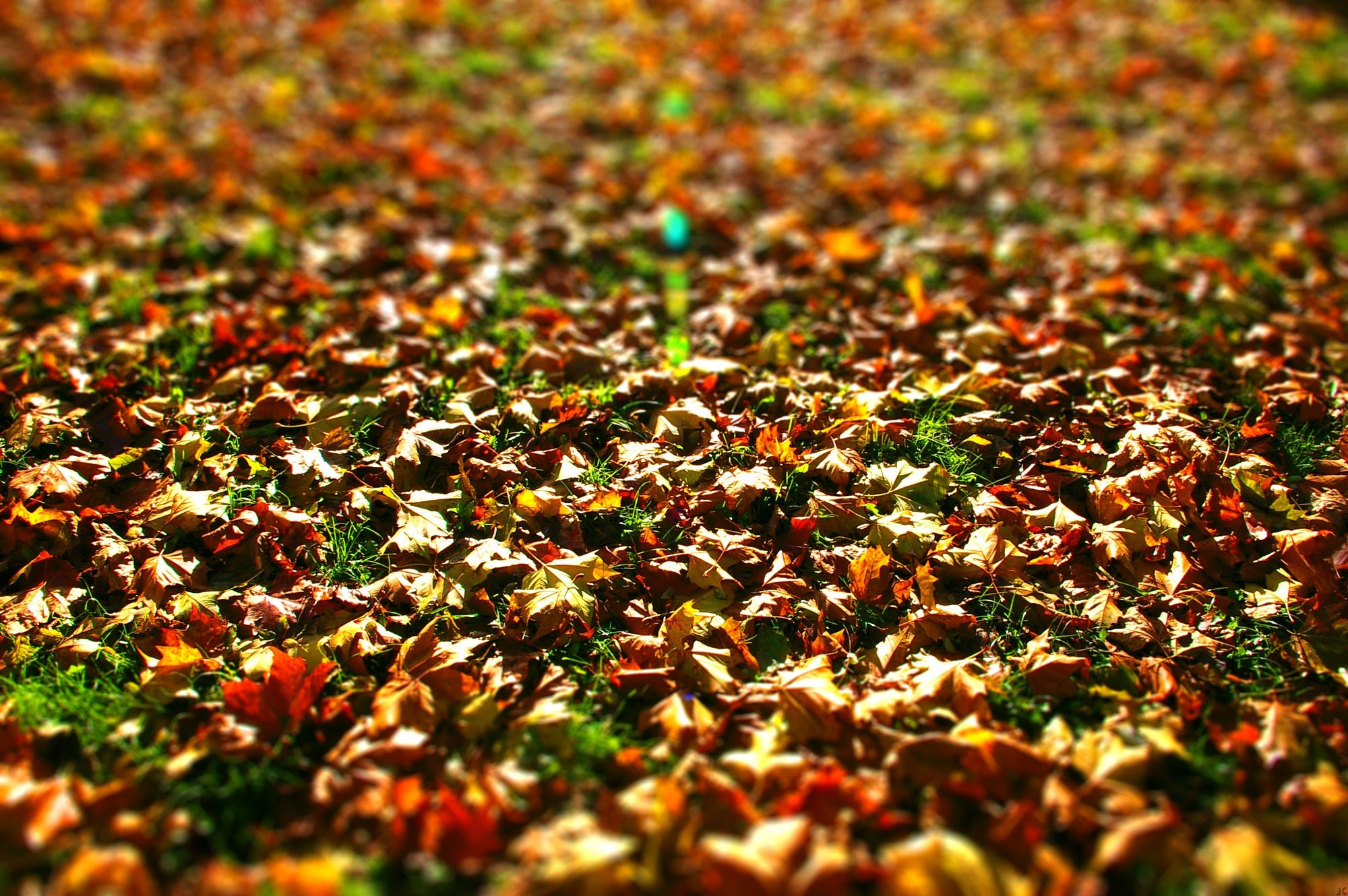 Leaves Wallpaper Download
