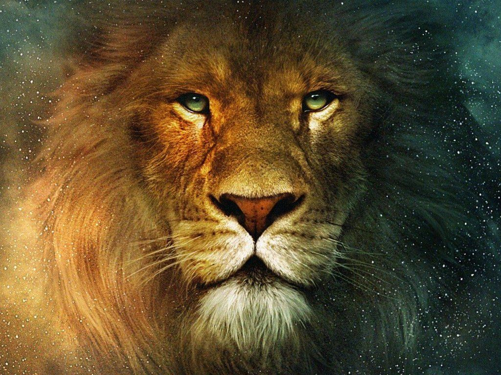 Lion Face HD Wallpaper
