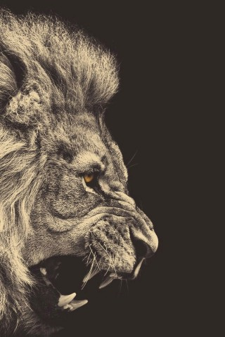 Download Lion Iphone Wallpaper Gallery