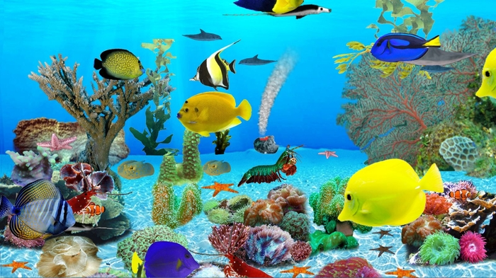 Free Live Wallpapers For Windows 8: Download Live Aquarium Wallpaper For Windows 8 Gallery