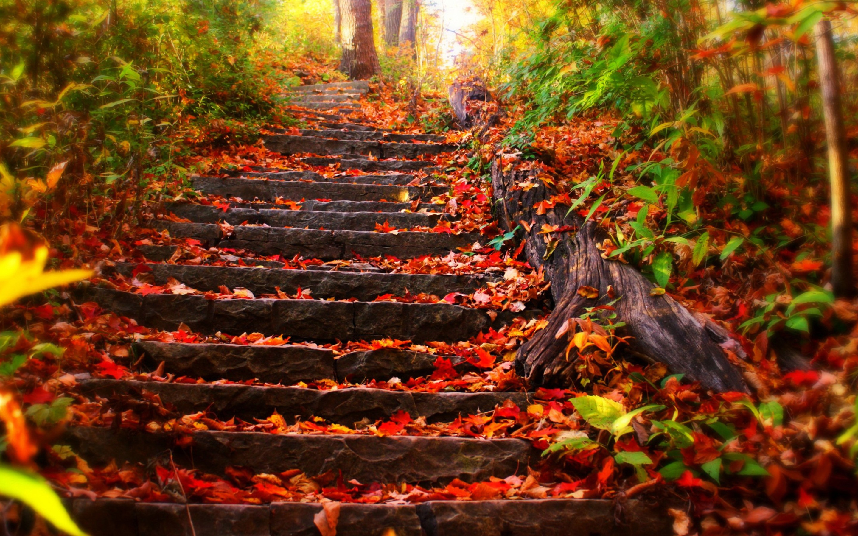 top 11 autumn live wallpapers for android androidheadlines com