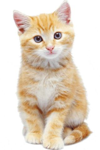 Live Cat Wallpapers