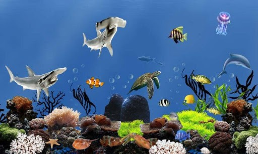 Live Fish Wallpaper