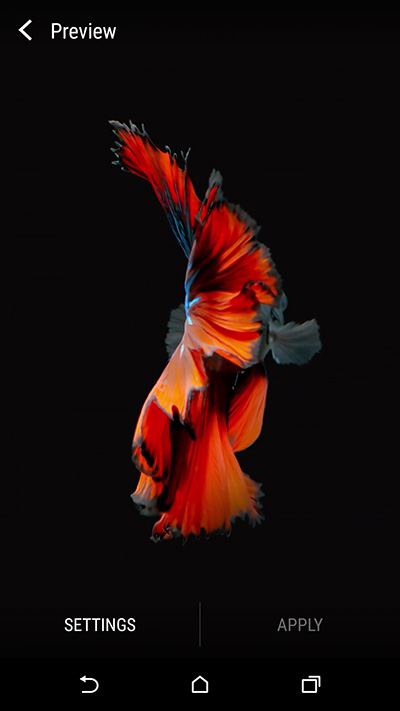 Live Fish Wallpaper For Iphone