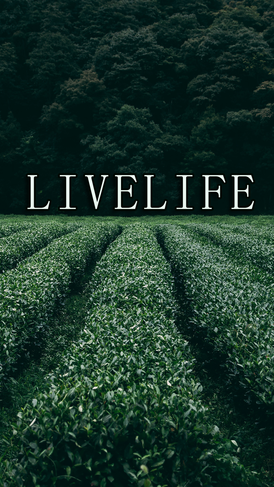 Live Life To The Fullest Wallpaper