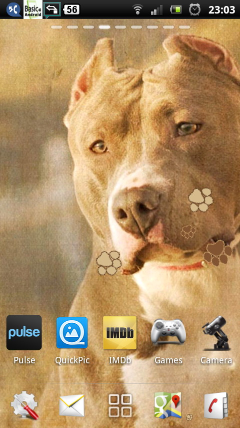 Live Pitbull Wallpaper