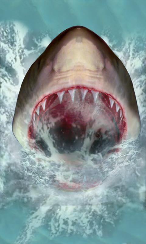 Live Shark Wallpaper