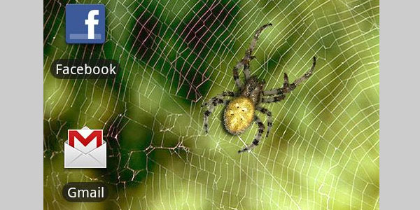 Live Spider Wallpaper