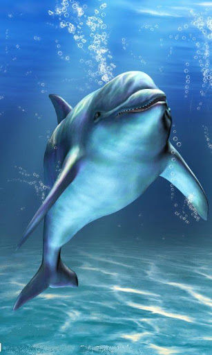 Dolphin Wallpapers For Mobile Group 40